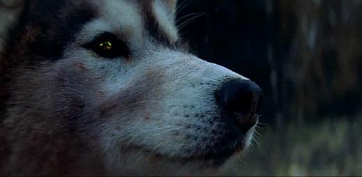 David Guetta: Parádní klip She Wolf z ledového Islandu