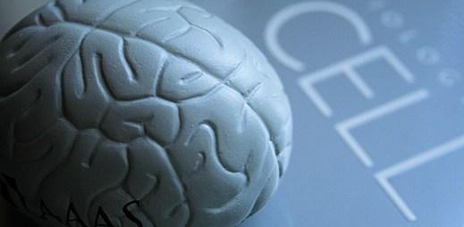 Udělejte si test: Máte mužský nebo ženský mozek?