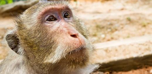 Vědci zastavili HIV u opic, teď zkusí léčit lidi