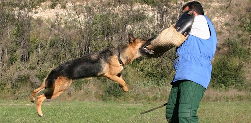 To jste ještě neviděli: Americký policista dává psovi české povely