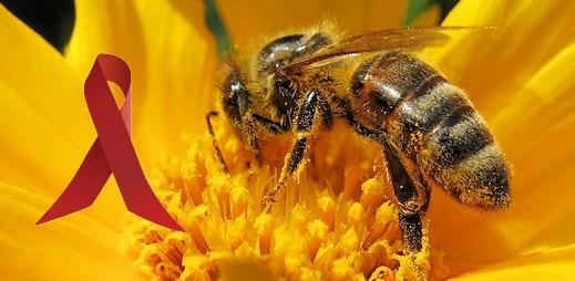 Svitla další naděje: Lubrikační gel s včelím jedem proti HIV/AIDS