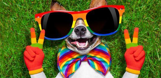 Prague Pride 2014: Hvězdou letošního festivalu jsou Pet Shop Boys